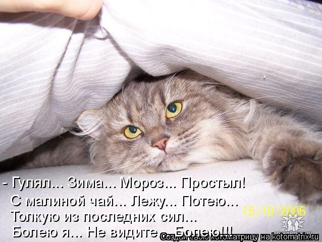 Котоматрица: - Гулял... Зима... Мороз... Простыл! С малиной чай... Лежу... Потею... Толкую из последних сил... Болею я... Не видите... Болею!!!