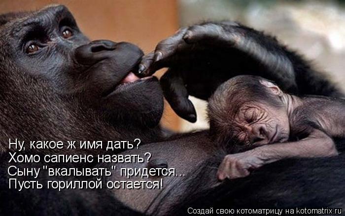 """Котоматрица: Ну, какое ж имя дать? Хомо сапиенс назвать? Сыну """"вкалывать"""" придется... Пусть гориллой остается!"""