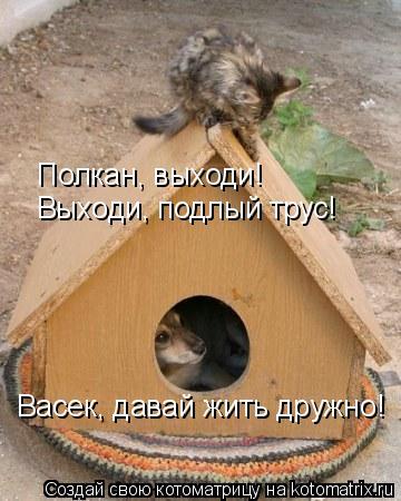 Котоматрица: Полкан, выходи! Выходи, подлый трус! Васек, давай жить дружно!