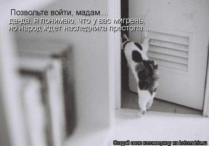 Котоматрица: Позвольте войти, мадам.... да-да, я понимаю, что у вас мигрень,  но народ ждёт наследника престола...