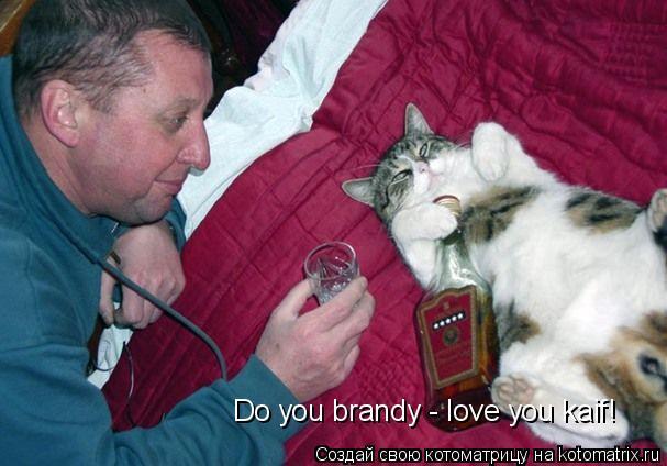 Котоматрица: Do you brandy - love you kaif!