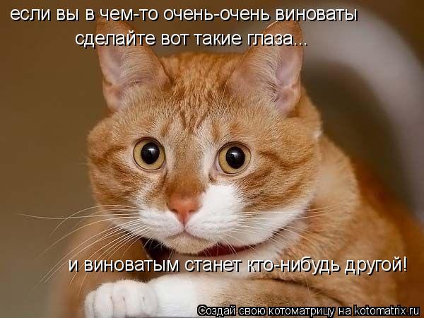 Котоматрица: сделайте вот такие глаза... и виноватым станет кто-нибудь другой! если вы в чем-то очень-очень виноваты