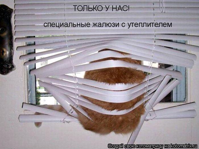 Котоматрица: ТОЛЬКО У НАС! специальные жалюзи с утеплителем