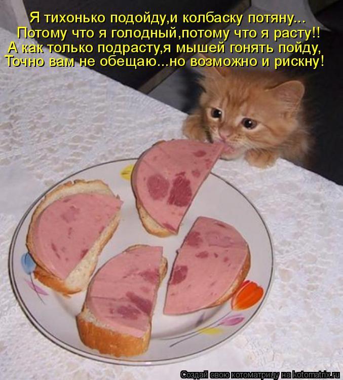 Котоматрица: Я тихонько подойду,и колбаску потяну... Потому что я голодный,потому что я расту!! А как только подрасту,я мышей гонять пойду, Точно вам не обе