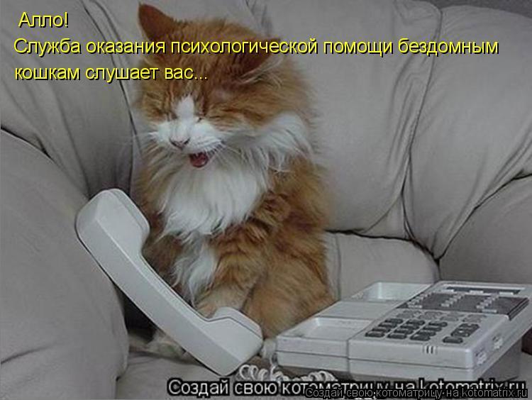 Котоматрица: Алло! Служба оказания психологической помощи бездомным кошкам слушает вас...