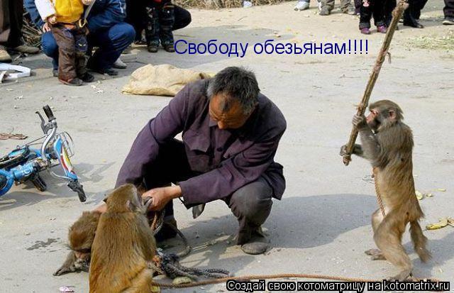 Котоматрица: Свободу обезьянам!!!!
