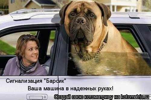 "Котоматрица: Сигнализация ""Барсик""  Ваша машина в надежных руках!"