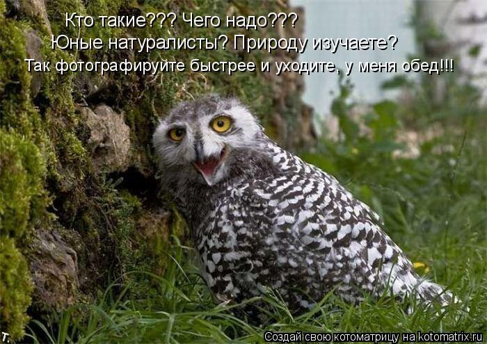 Котоматрица: Кто такие??? Чего надо??? Юные натуралисты? Природу изучаете? Так фотографируйте быстрее и уходите, у меня обед!!!