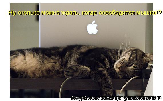 Котоматрица: Ну сколько можно ждать, когда освободится мышка!?