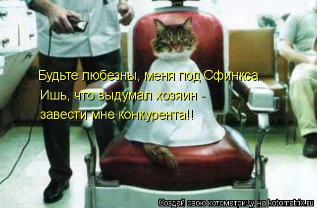 Котоматрица: Будьте любезны, меня под Сфинкса Ишь, что выдумал хозяин -  завести мне конкурента!!