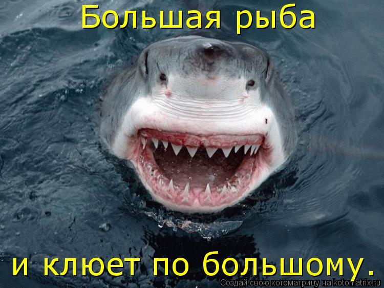 Котоматрица: Большая рыба и клюет по большому.