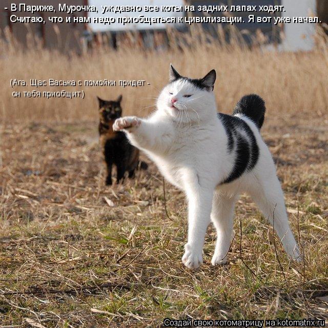 Котоматрица: - В Париже, Мурочка, уж давно все коты на задних лапах ходят. Считаю, что и нам надо приобщаться к цивилизации. Я вот уже начал. (Ага. Щас Васька
