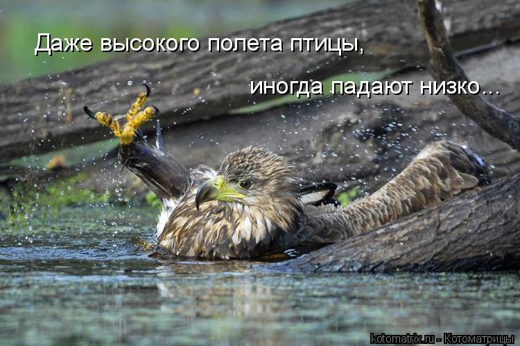 Котоматрица: Даже высокого полета птицы, иногда падают низко...
