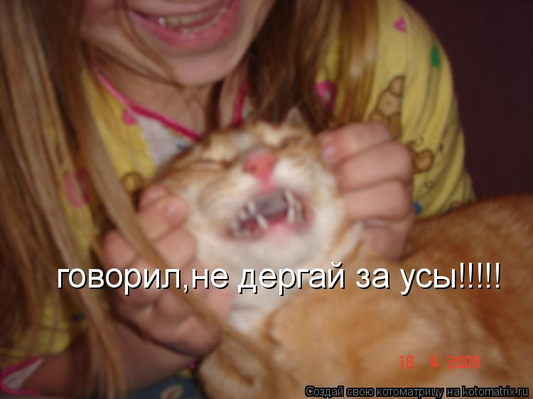 Котоматрица: говорил,не дергай за усы!!!!!