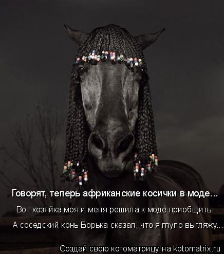Котоматрица: Говорят, теперь африканские косички в моде... Вот хозяйка моя и меня решила к моде приобщить А соседский конь Борька сказал, что я глупо выгл