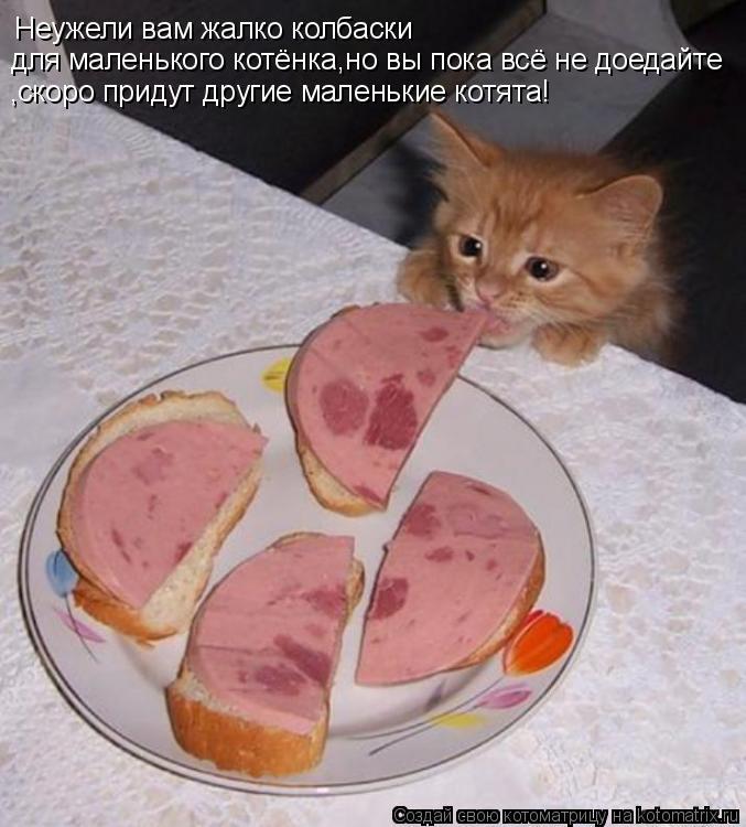 Котоматрица: Неужели вам жалко колбаски для маленького котёнка,но вы пока всё не доедайте ,скоро придут другие маленькие котята!