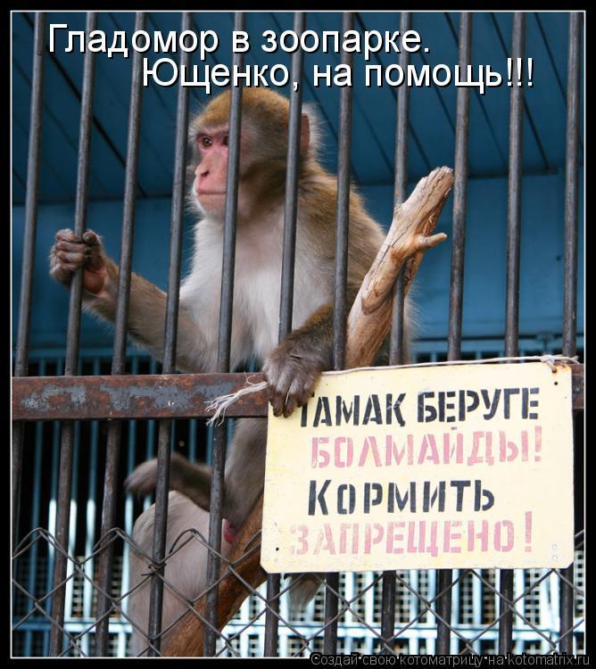 Котоматрица: Гладомор в зоопарке. Ющенко/ Ющенко, на помощь!!!