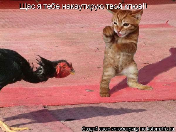 Котоматрица: Щас я тебе накаутирую твой клюв!!