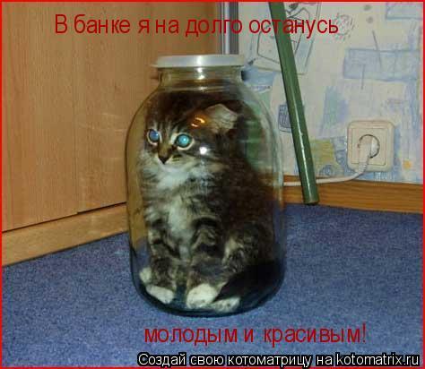 Котоматрица: В банке я на долго останусь  молодым и красивым!