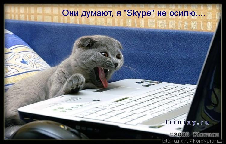 "Котоматрица: Они думают, я ""Skype"" не осилю...."