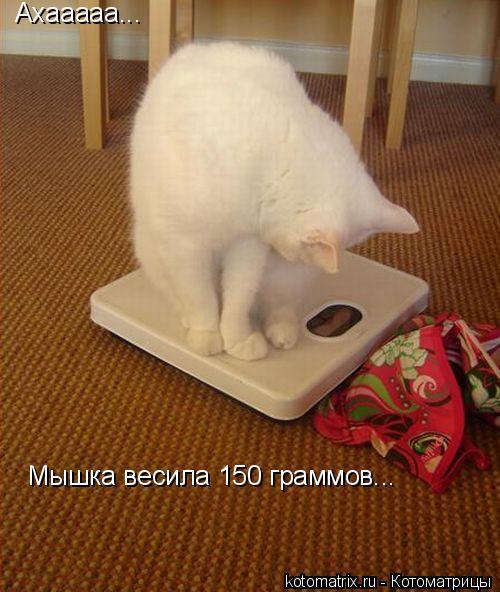 Котоматрица: Ахааааа... Мышка весила 150 граммов...