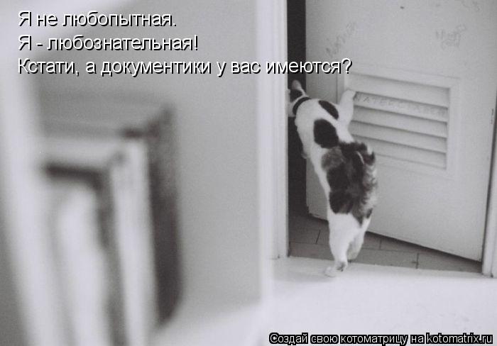 Котоматрица: Я не любопытная. Я - любознательная! Кстати, а документики у вас имеются?