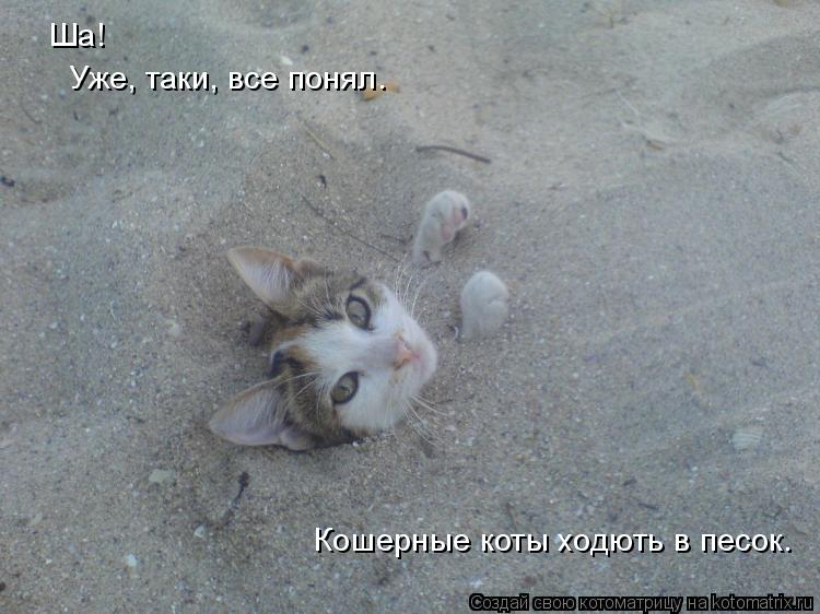 Котоматрица: Ша! Уже, таки, все понял. Кошерные коты ходють в песок.