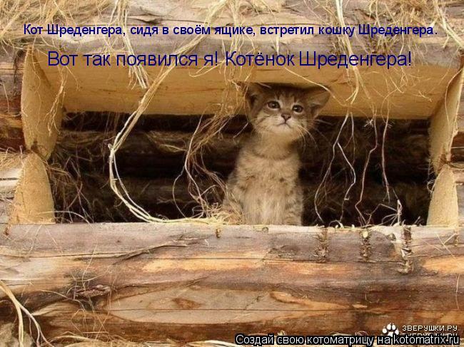 Котоматрица: Кот Шреденгера, сидя в своём ящике, встретил кошку Шреденгера. Вот так появился я! Котёнок Шреденгера!