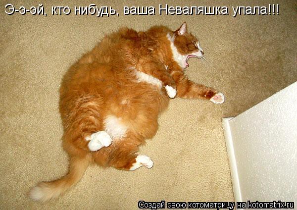 Котоматрица: Э-э-эй, кто нибудь, ваша Неваляшка упала!!!