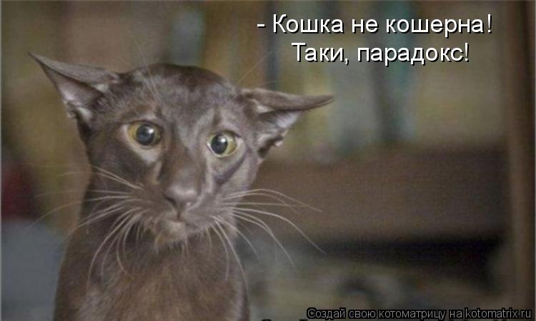 Котоматрица: - Кошка не кошерна! Таки, парадокс!
