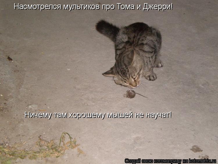 Котоматрица: Насмотрелся мультиков про Тома и Джерри! Ничему там хорошему мышей не научат!