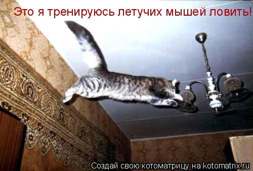 Котоматрица: Это я тренируюсь летучих мышей ловить!