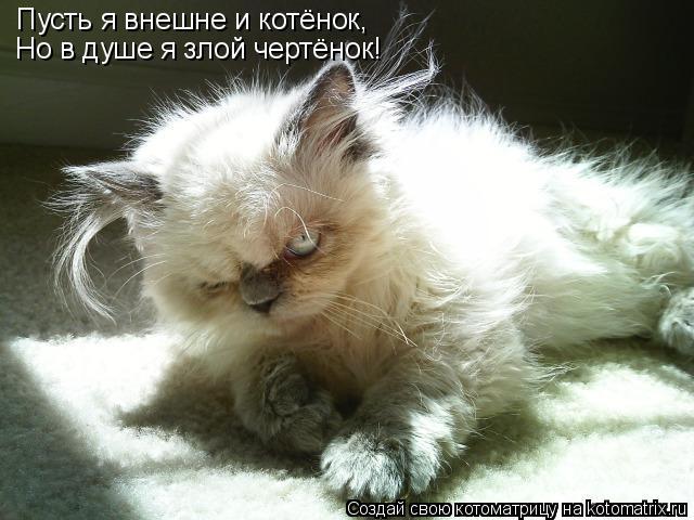 Котоматрица: Пусть я внешне и котёнок, Но в душе я злой чертёнок!