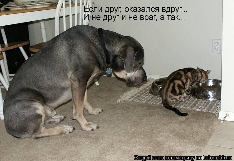 Котоматрица: Если друг, оказался вдруг... И не друг и не враг, а так...