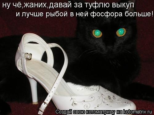 Котоматрица: ну чё,жаних,давай за туфлю выкуп и лучше рыбой в ней фосфора больше!