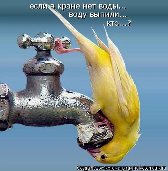 Котоматрица: если в кране нет воды... воду выпили... кто...?