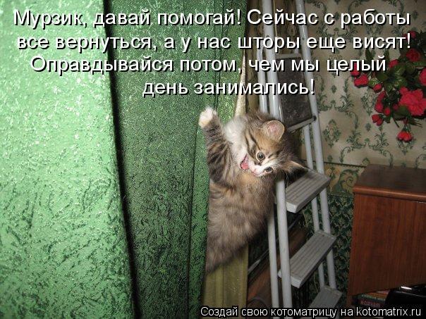 Котоматрица: Мурзик, давай помогай! Сейчас с работы все вернуться, а у нас шторы еще висят! Оправдывайся потом, чем мы целый  день занимались!