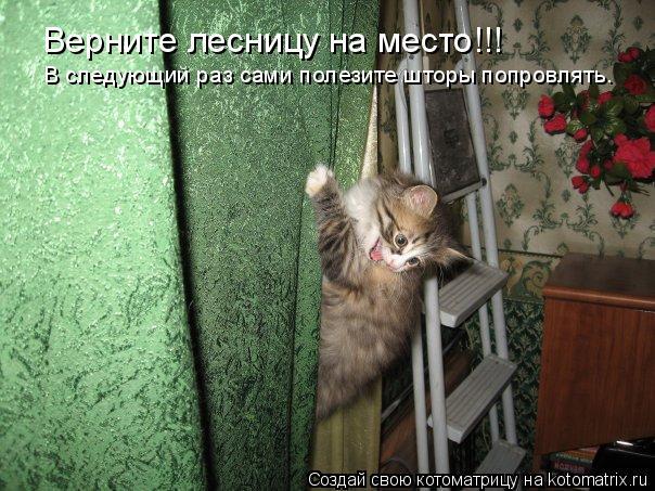 Котоматрица: Верните лесницу на место!!! В следующий раз сами полезите шторы попровлять.