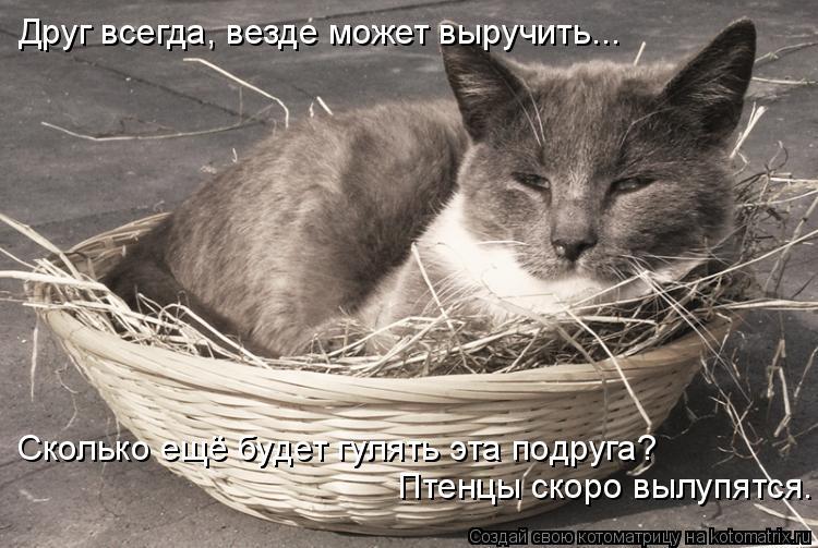 Котоматрица: Друг всегда, везде может выручить... Сколько ещё будет гулять эта подруга?  Птенцы скоро вылупятся.