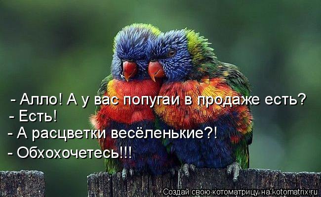 Котоматрица: - Алло! А у вас попугаи в продаже есть? - Есть! - А расцветки весёленькие?! - Обхохочетесь!!!