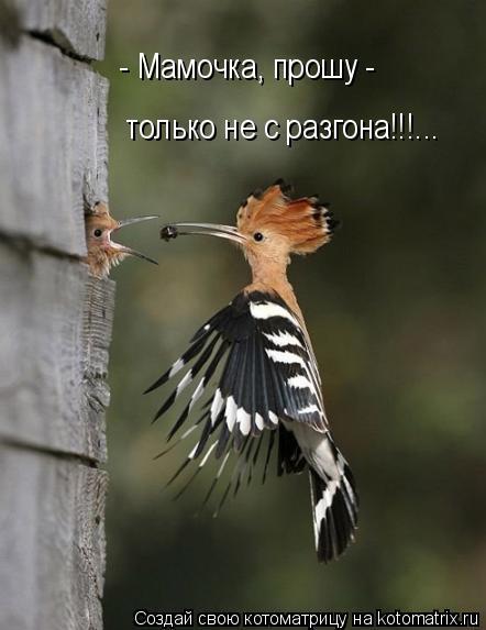 Котоматрица: - Мамочка, прошу - только не с разгона!!!...
