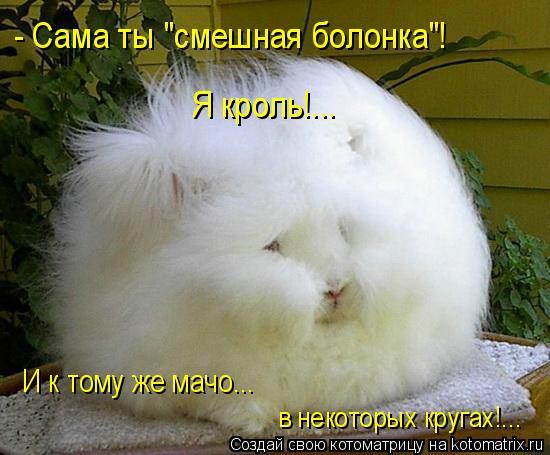 """Котоматрица: - Сама ты """"смешная болонка""""!  Я кроль!... И к тому же мачо... в некоторых кругах!..."""