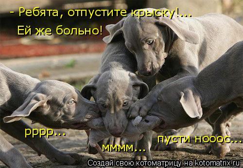 Котоматрица: - Ребята, отпустите крыску!... Ей же больно! рррр... мммм... пусти нооос...