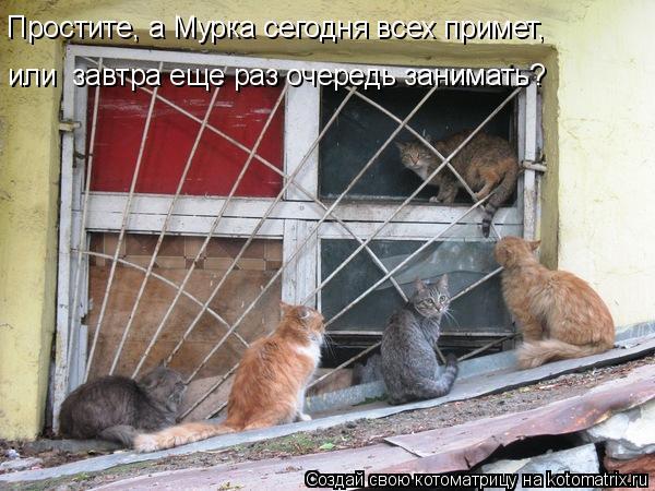 Котоматрица: Простите, а Мурка сегодня всех примет, или  завтра еще раз очередь занимать?