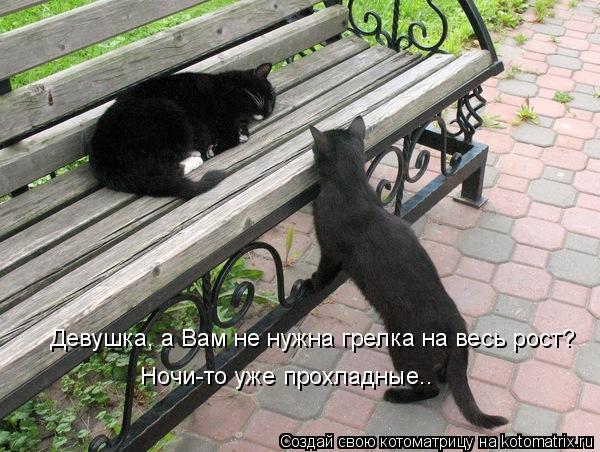 http://kotomatrix.ru/images/lolz/2009/09/03/351525.jpg