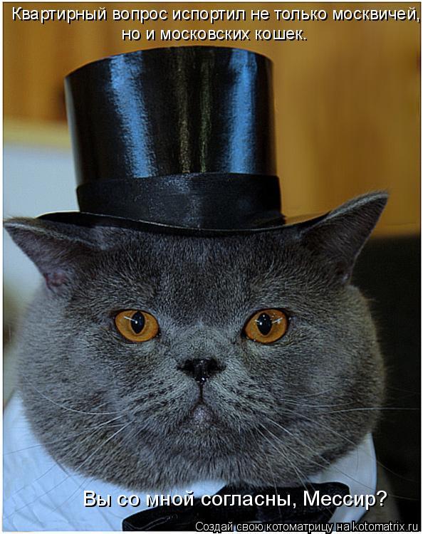 Котоматрица: Квартирный вопрос испортил не только москвичей, но и московских кошек. Вы со мной согласны, Мессир?
