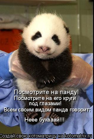 Котоматрица: Посмотрите на панду! Посмотрите на его круги  под глазами! Всем своим видом панда говорит: Неее бухааай!!!
