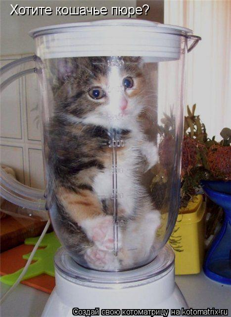 Котоматрица: Хотите кошачье пюре?