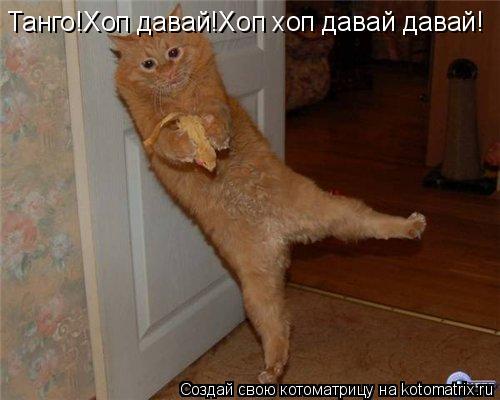 Котоматрица: Танго!Хоп давай!Хоп хоп давай давай!