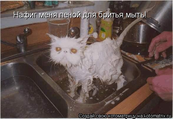 Котоматрица: Нафиг меня пеной для бритья мыть!
